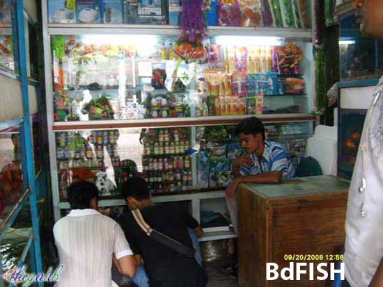 Aquarium Fisheries in Dhaka 2