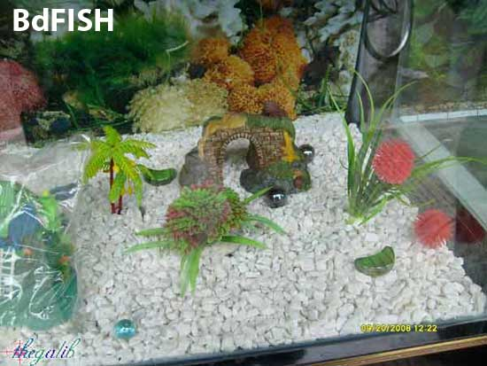 Aquarium decorative and plants are available in aquarium shop in university market, katabon, Dhaka