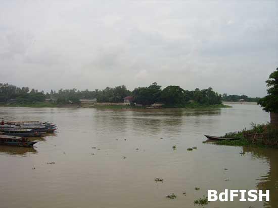 River Nagar falls into river Gur; Location: Singra, Natore