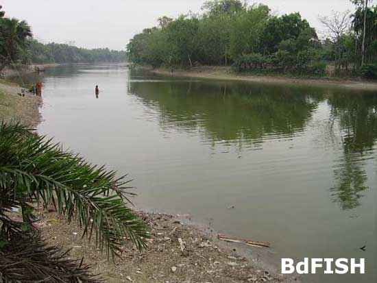 River Baral: now utilize for aquaculture in the dry season; Location: Chatmohar, Pabna