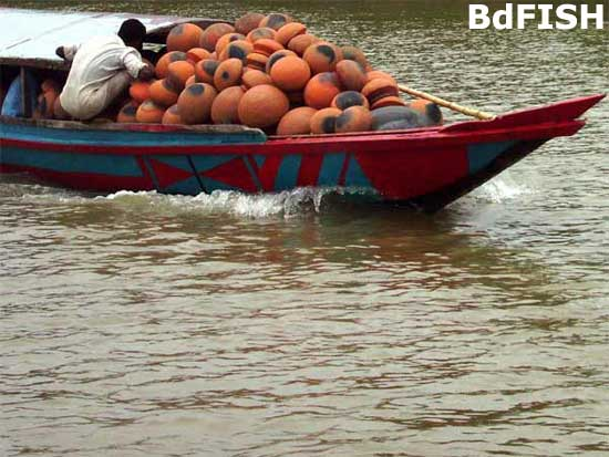 Transport and trade in Chalan beel; Location: River Gur, Singra, Natore