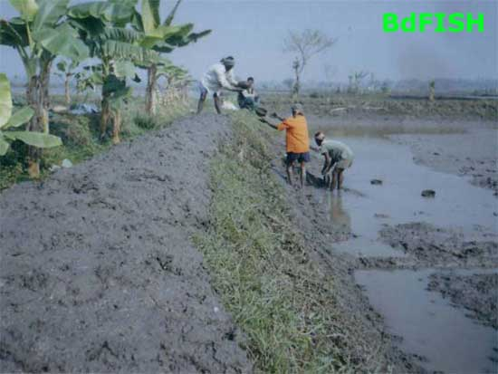 Preparation of nursery canal