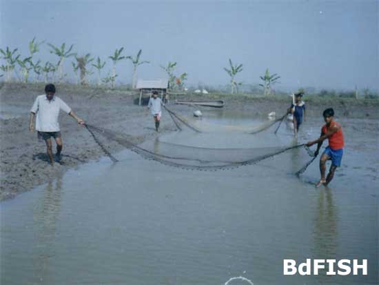 Netting for harvesting