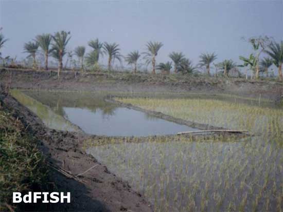 A culture plot for freshwater prawn farming