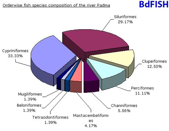 Orderwise fish species composition of the river Padma near Rajshahi