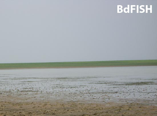 Partial view of a Beel of Hakaluki Haor in upcoming dry season