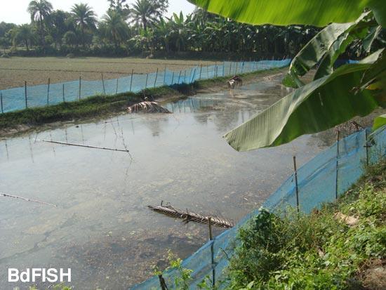 carp-prawn polyculture farm