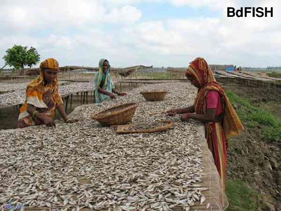 Sorting of dried fish