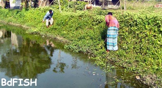 Removal effort of aquatic vegetation