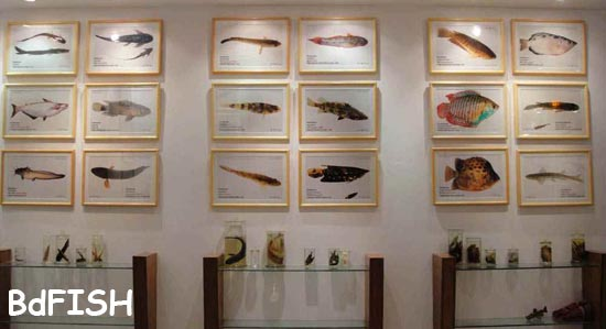 A gallery of Fish Museum and Biodiversity Center, BAU
