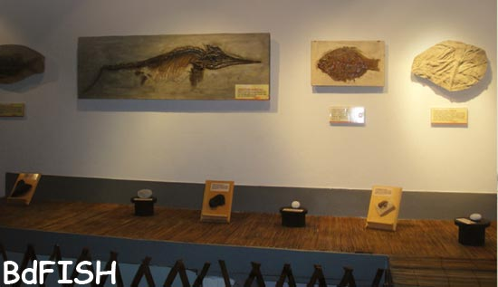 A gallery of ancient seas of Fish Museum and Biodiversity Center, BAU