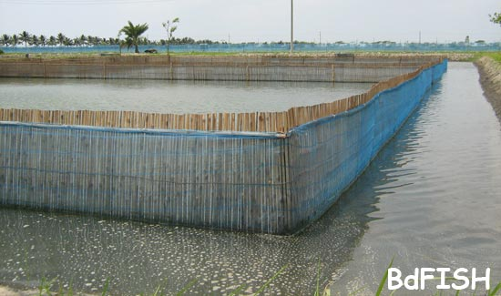 Dyke is protected with bamboo and net made fence in inner side