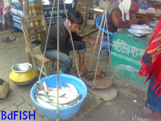 Atrai fish market an overview bdfish feature for Fish weighing scale