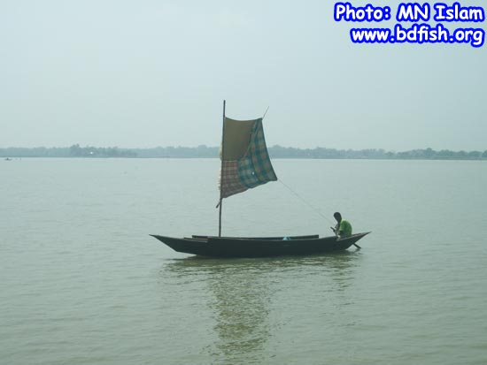 Transportation of people by boat with sail in chalan beel