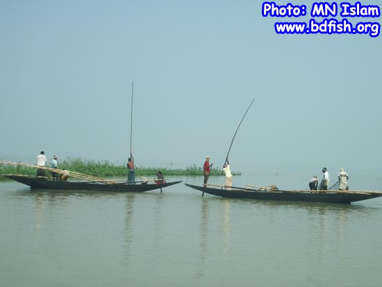 Fishing by net in chalan beel