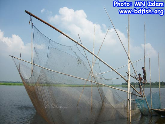 Fishing by net (Khara Jal) in chalan beel