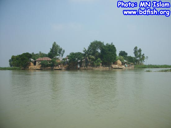 A typical small village in chalan beel