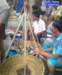 Auctioning in Shaheb bazar Fish market, Rajshahi