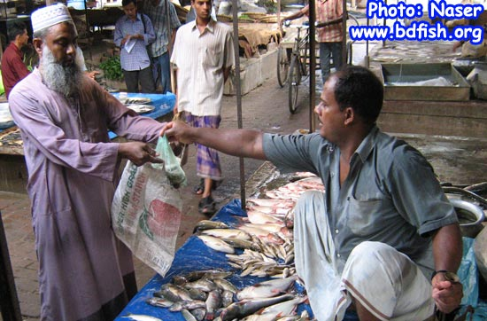 Selling of fish in Laxmipur market, Rajshahi