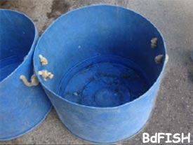 Plastic drum used for holding fish