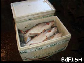 Thermocol box used for holding fish