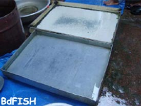 Tray used for holding live fish