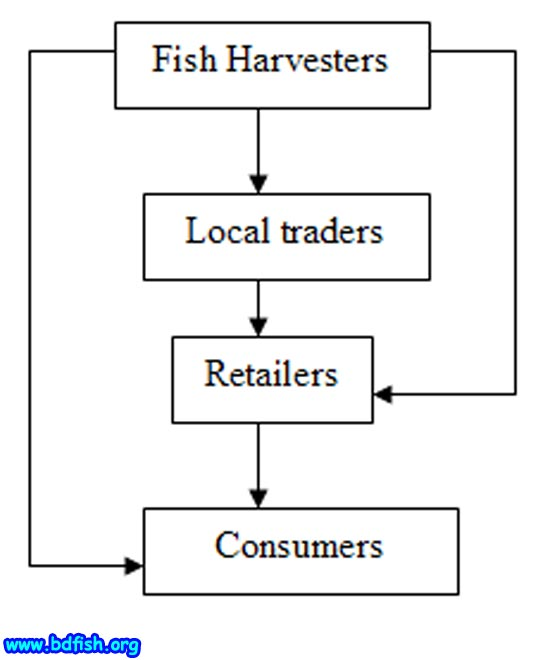 Figure-4. Marketing channel of harvested SIS in visited fish market (Shaheb bazar and Laxmipur)