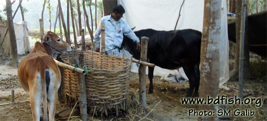 He has brought two cows and two goats with the money earned by selling fish and planning to buy more livestock in near future