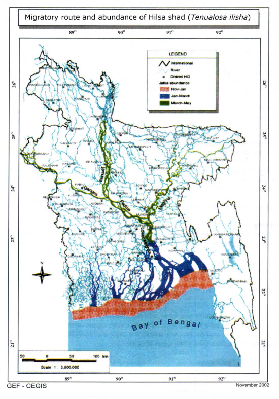 Migratory route and abundance of Hilsa shad (Tenualosa ilisha)