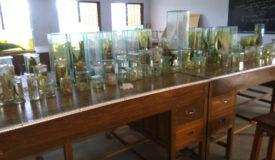 Zoology Lab