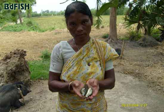 An Adivasi woman showing harvested fish from her rice-fish-plot
