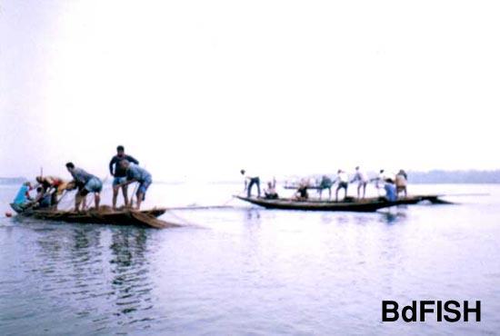 Fishing by using seine net in Bookbhara Baor