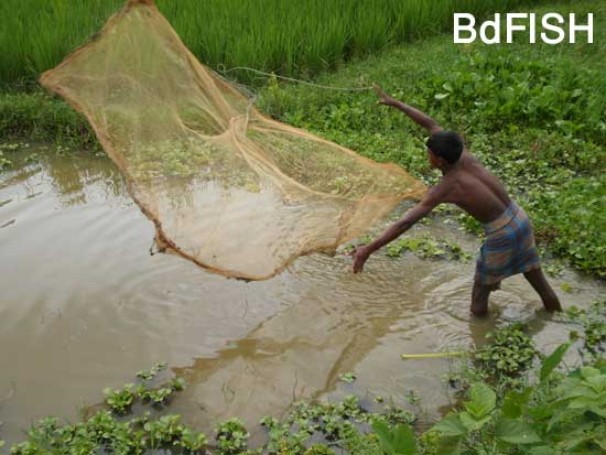 Fishing using Khepla jal from road side canals: 01
