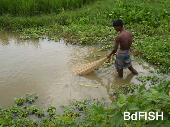 Fishing using Khepla jal from road side canals: 02