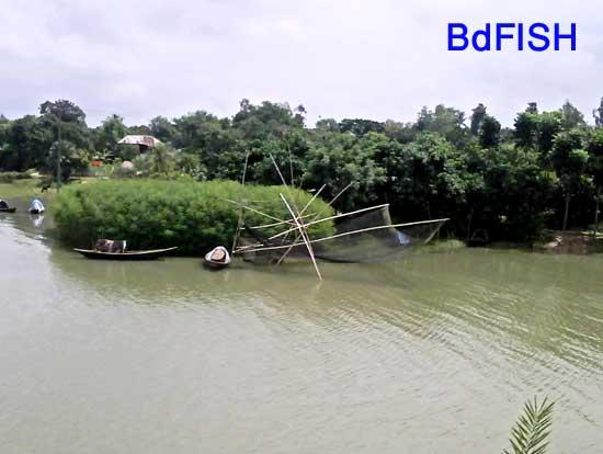 Fishing using Khora jal in Chalan beel: 01