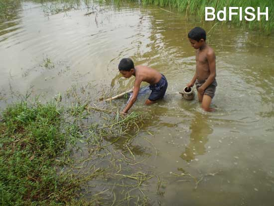 Fishing using Thela jal from ditches: 01
