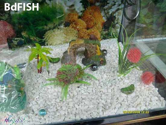Aquarium decorative and plants are available in aquarium shop in university market, katabon, Dhaka