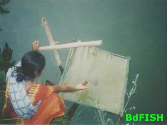 Fish Feed application