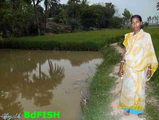 Rice-fish farming