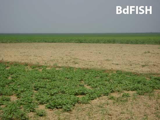 Partial view of Hakaluki Haor in dry season