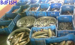Modern Plastic container: used in fish transportation