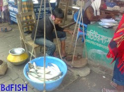 Weighing Scale in the mentioned fish market