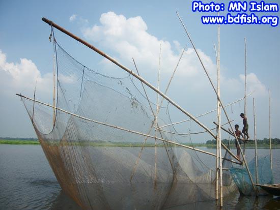 Fishing by net (Khara Jal) in chalan beel
