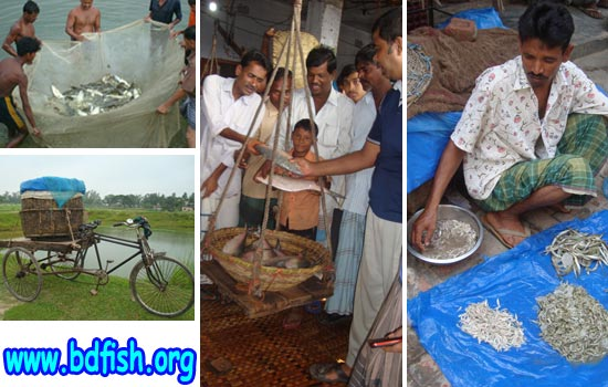 Marketing Channel of Some Major Fish Groups in Fish Markets of Rajshahi City Corporation