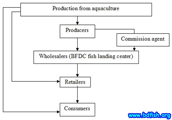 Figure-3. Marketing channel of harvested carp and catfishes in visited fish market (Laxmipur)