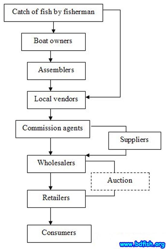 Figure-5. Marketing channel of Hilsha in visited fish market (Shaheb bazar and Laxmipur)