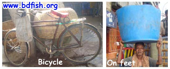 Bicycle and on feet as transporter of fish
