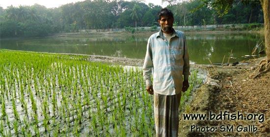 Md. Ameer Sheikh is an inhabitant of Purba Gangabardi village of Faridpur