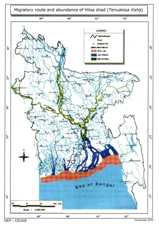 Migratory route and abundance of Hilsa shad (Tenualosa ilisha)