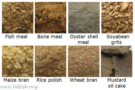 Some common fish feed ingredients of Bangladesh